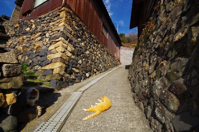 坂道で寝る猫