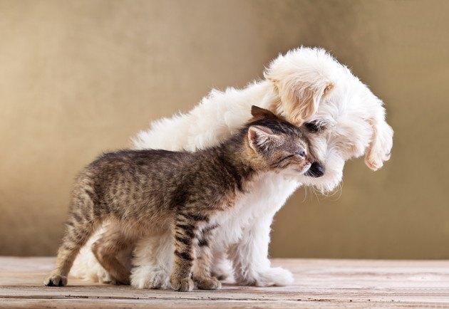 寄り添う子猫と子犬の写真