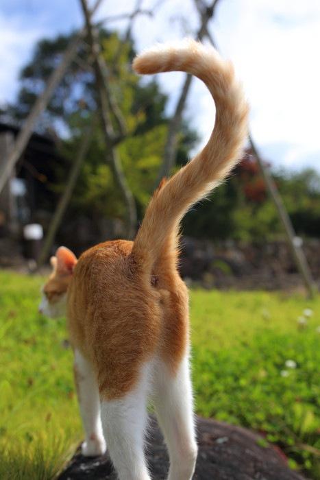 クエスチョンマークの猫のしっぽ