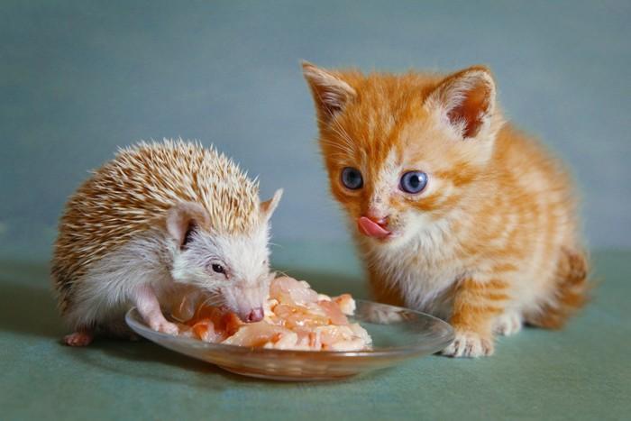 子猫とハリネズミ