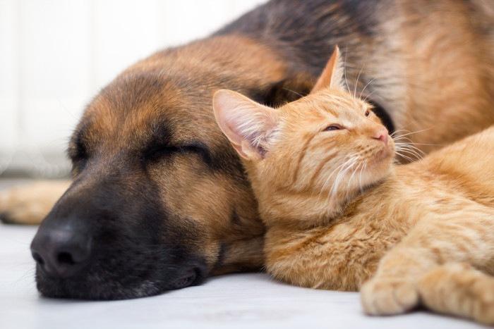 一緒に眠る犬と猫の写真