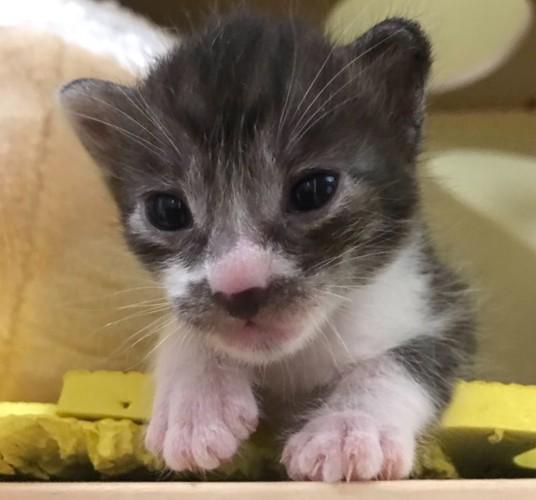 白黒子猫ちゃん
