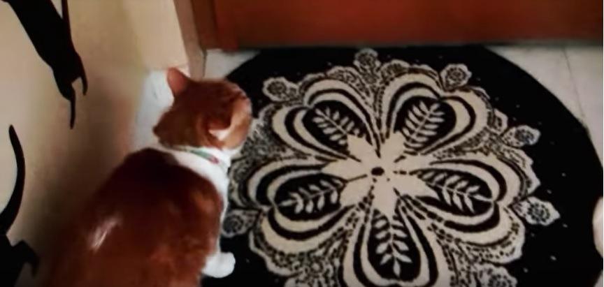 玄関へ向かう猫の背中