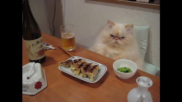 真顔で正面を向く猫