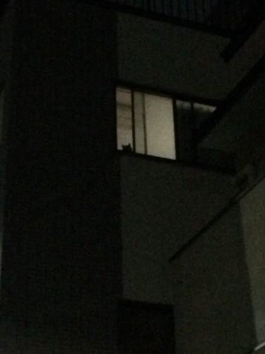 窓からのぞく猫の影