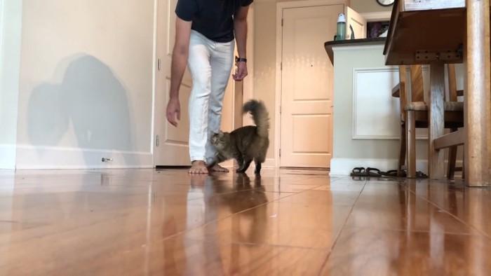 飼い主と猫がスタンバイ