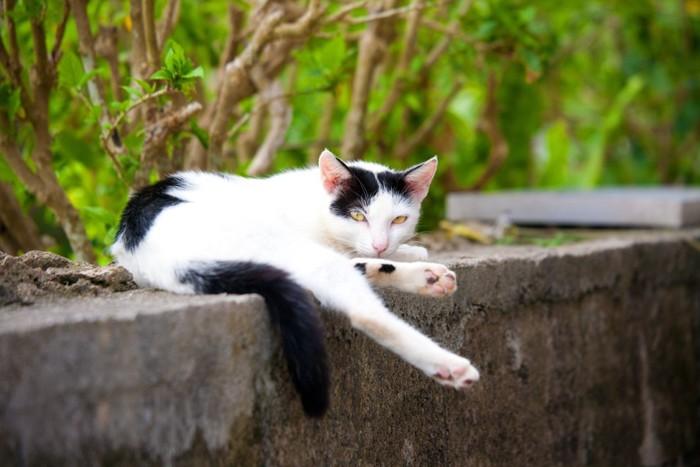 片足の伸ばしている猫