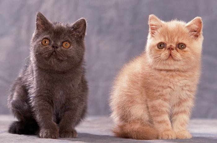 色違いの猫