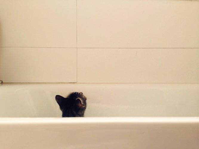 浴槽から頭だけ見えている子猫