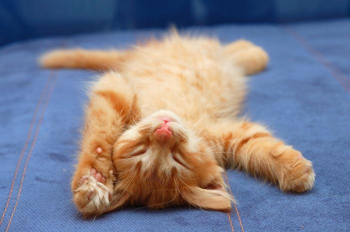 上を向いて寝る子猫