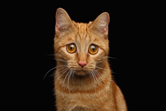 悲しい表情で見つめる猫