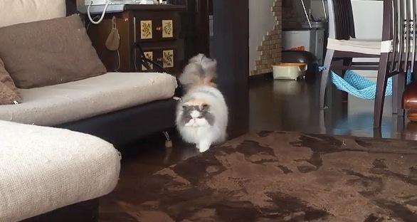 ゆっくりこちらに歩いてくる猫