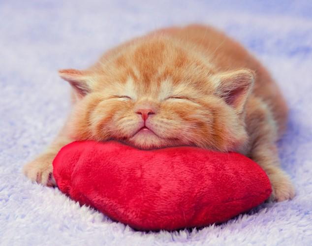 ハートのクッションで寝る子猫