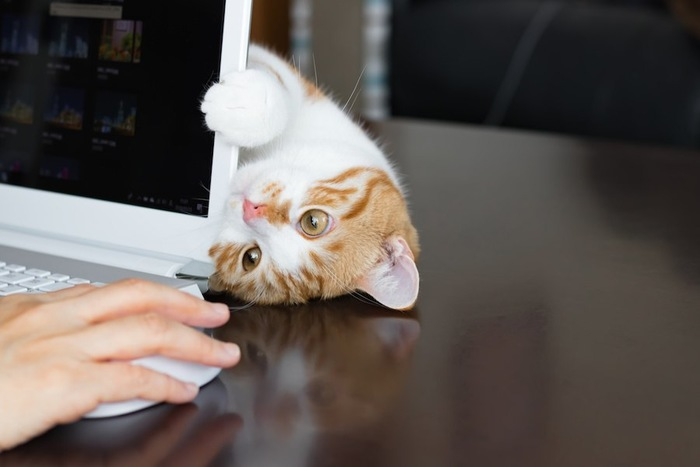 パソコンの裏に寝転んでアピールする猫