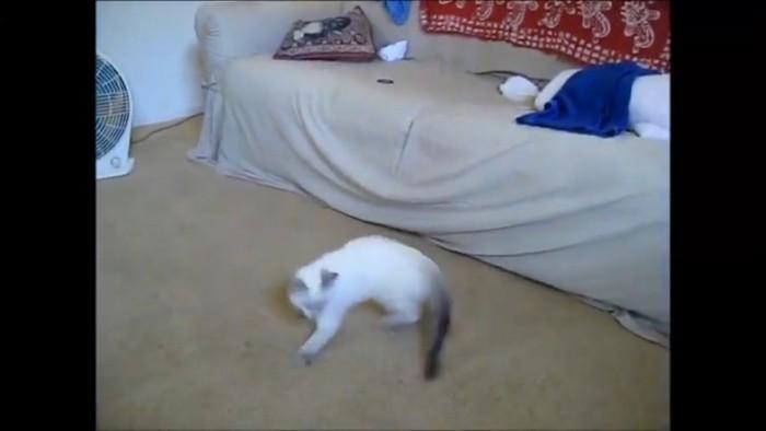 子猫がしっぽを追いかける