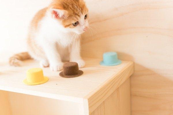 棚の上にいる茶色と白の子猫