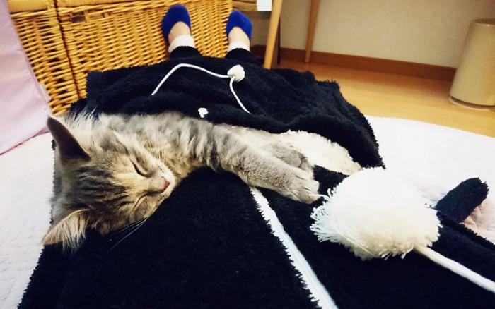 猫ポケットIN