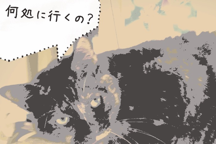 ふせしている猫