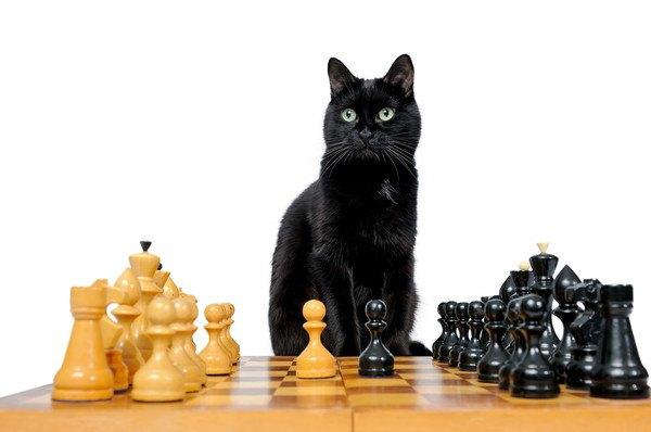 黒猫とチェス