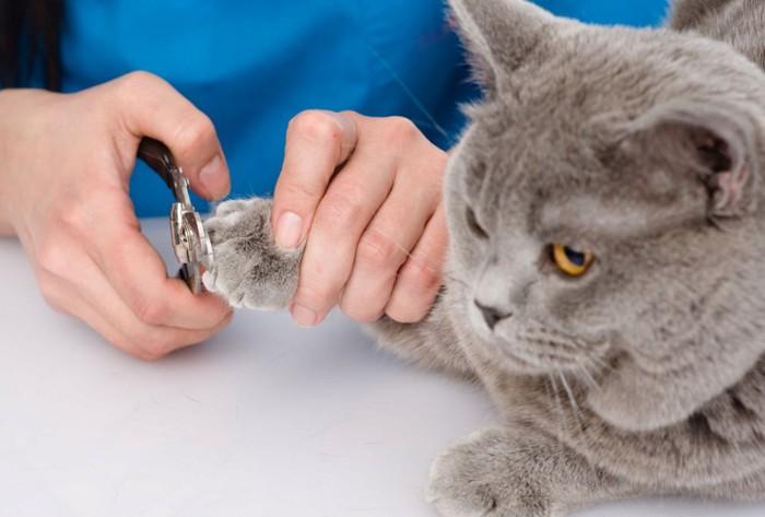 爪切りする猫