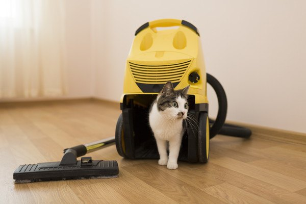 猫と黄色い掃除機