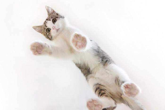 ガラスの上を歩く子猫