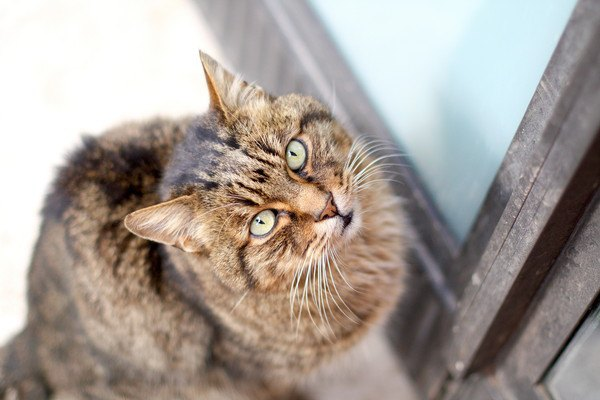 開けてほしく見上げる猫