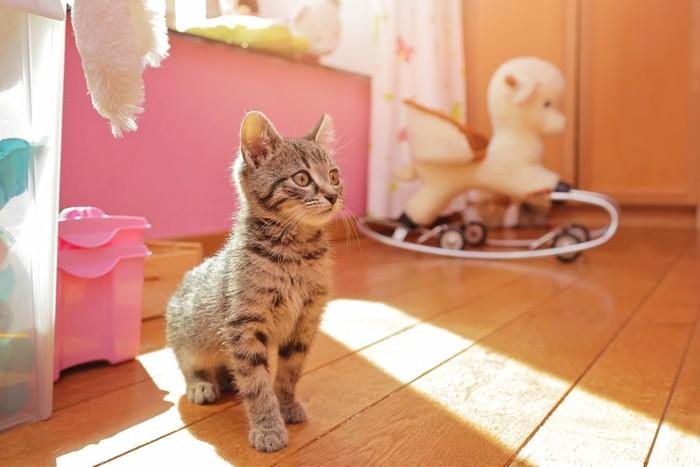 子供部屋にいる子猫