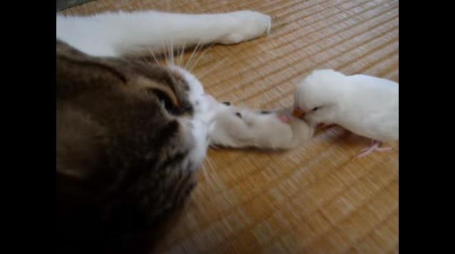 猫のアップと肉球をつつく鳥