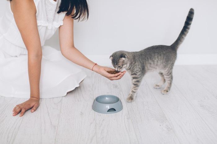 手皿でフードを与える女性と猫