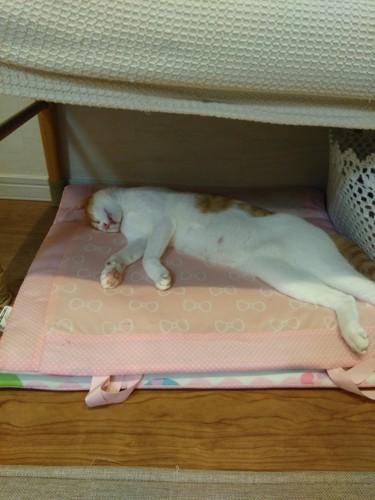 家に帰って来てほっとしたのか深い眠りについている猫