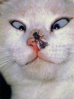猫の変顔2