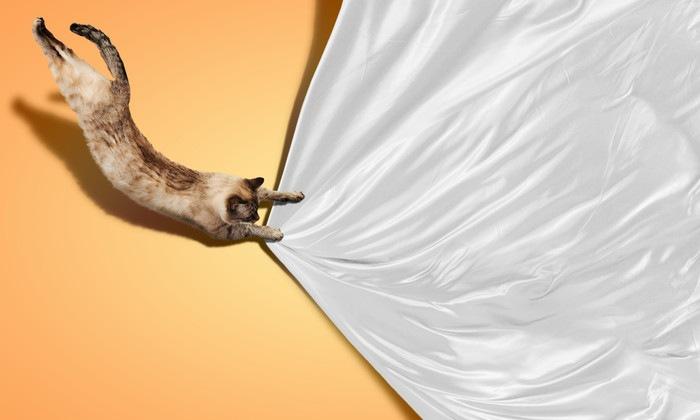 布に飛びつく猫