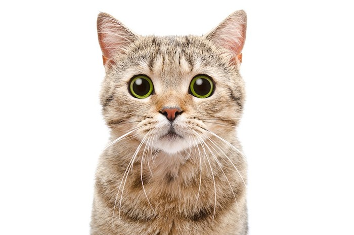 驚いた表情の猫の顔