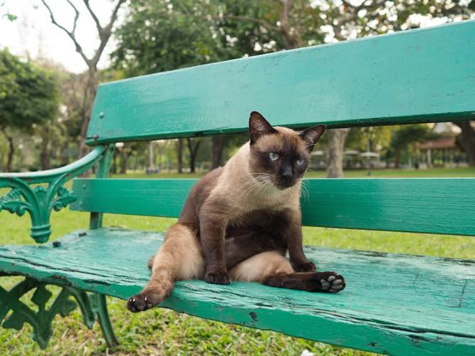 ベンチの上でくつろぐ猫