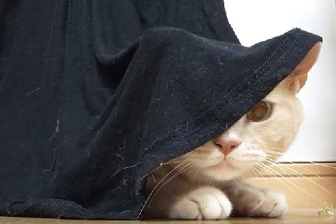 顔半分だけ出た猫
