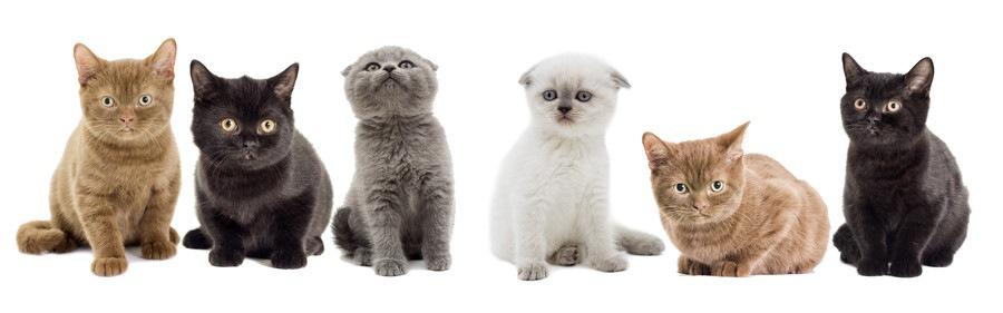 様々な毛色の子猫たち