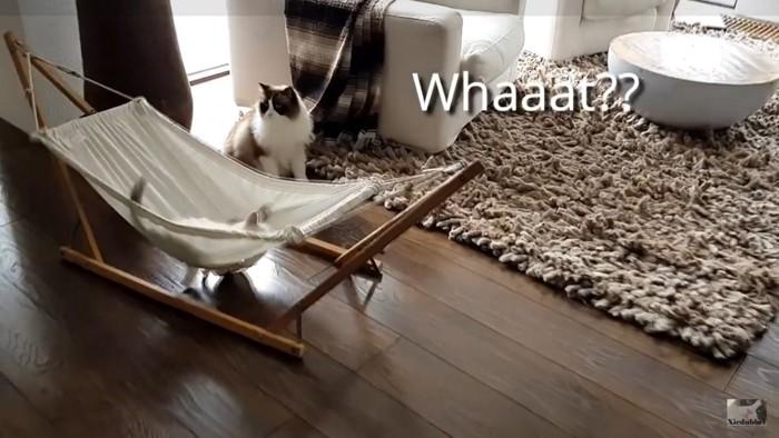 驚きを隠せない猫