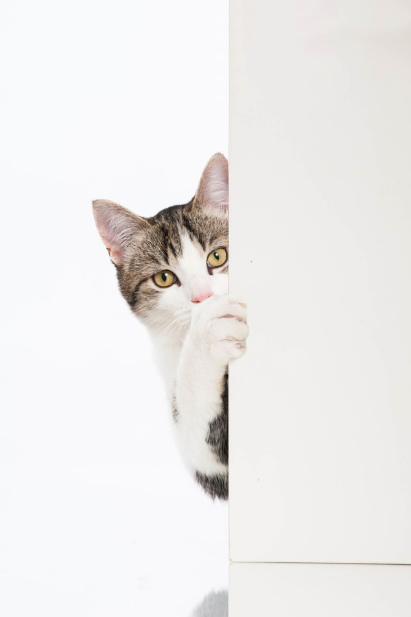 ドア越しにこちらを見ている猫