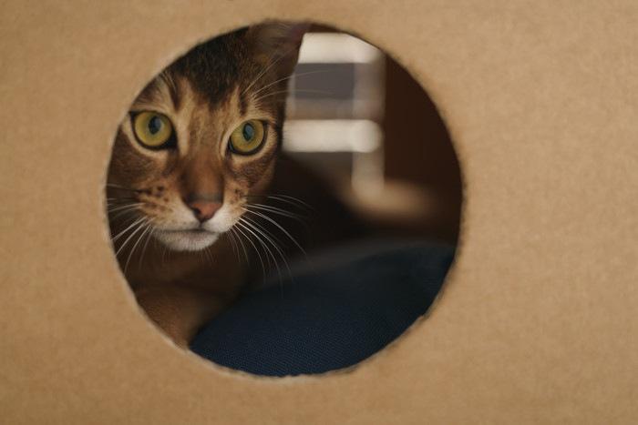 段ボールの穴からのぞく猫