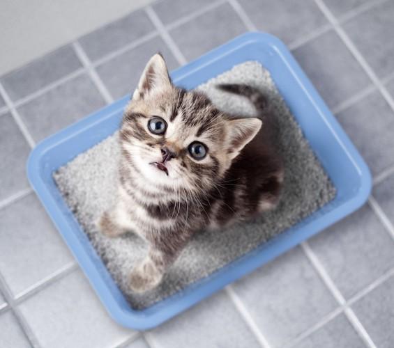 猫のトイレのしつけ 始める時期や方法