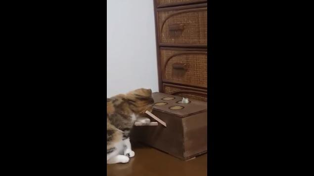 首をさらに傾げてバーを下げる猫