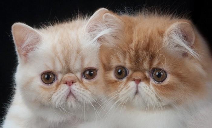 2匹顔をくっつけている猫
