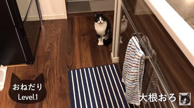遠くから見つめる猫