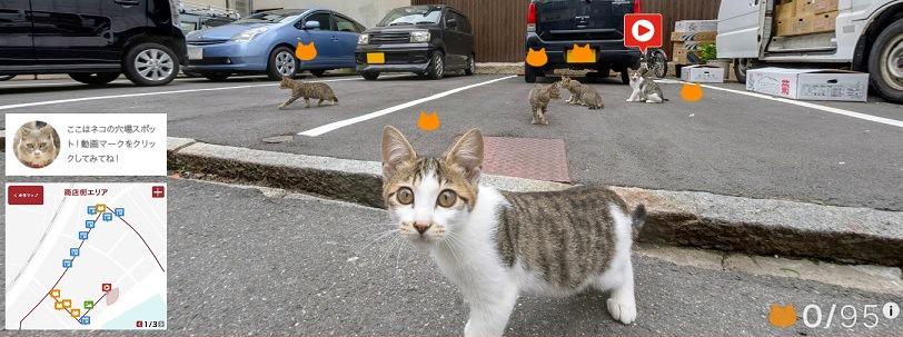駐車場の猫達