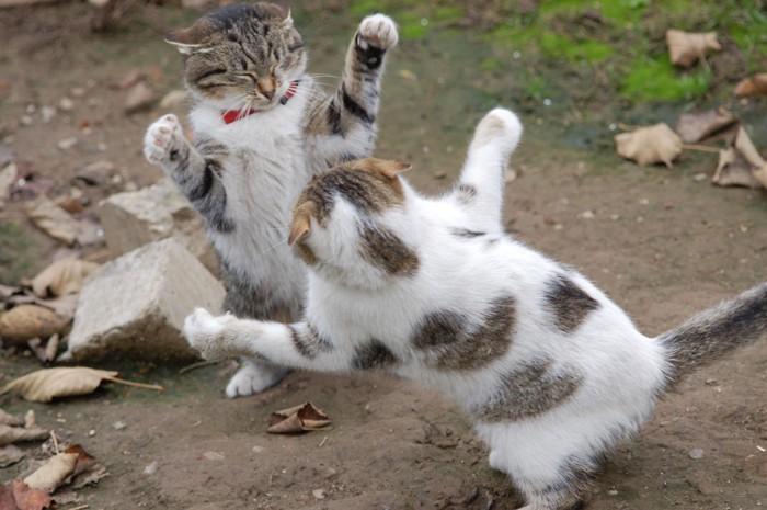 外で喧嘩する猫