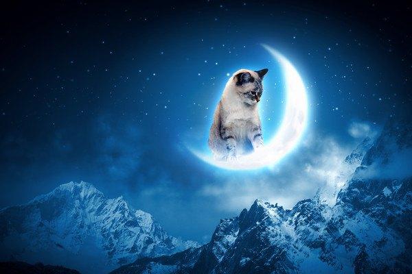 月の上の猫
