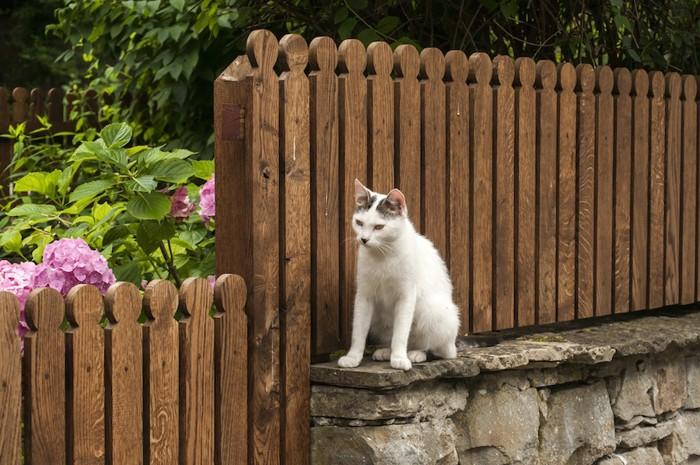 ガーデンフェンスと猫