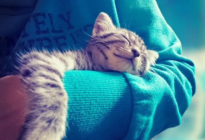 抱かれて寝る猫