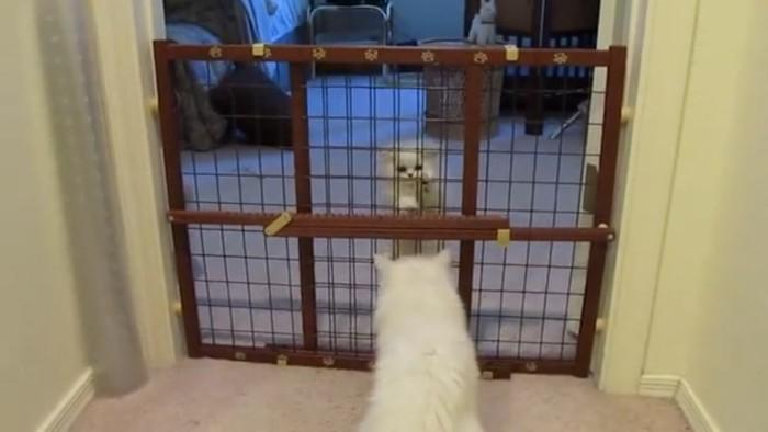 子猫に教える猫